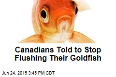 Canadians Told to Stop Flushing Their Goldfish