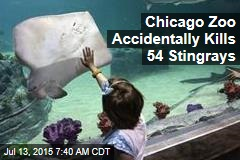 Chicago Zoo Accidentally Kills 54 Stingrays