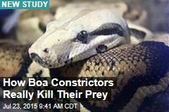 Think Boas Suffocate Their Prey? Think Again