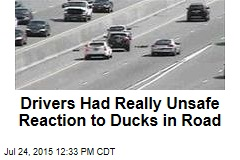 Drivers Had Really Unsafe Reaction to Ducks in Road