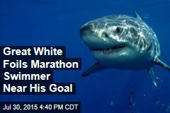 Great White Foils Marathon Swimmer Near His Goal