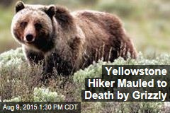Yellowstone Hiker Mauled to Death by Grizzly