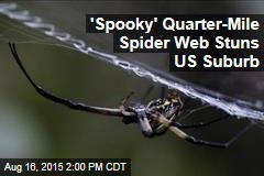 'Spooky' Quarter-Mile Spider Web Stuns Residents
