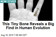 This Tiny Bone Reveals a Big Find in Human Evolution