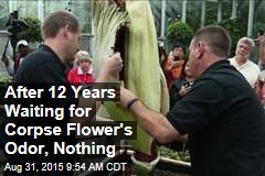 After 12 Years Waiting for Corpse Flower's Odor, Nothing