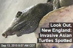Look Out, New England: Invasive Asian Turtles Spotted
