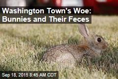Washington Town's Woe: Bunnies and Their Feces