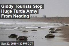 'Eco-Tourist Mob' Blocks Nesting Sea Turtles