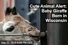 Cute Animal Alert: Baby Giraffe Born in Wisconsin