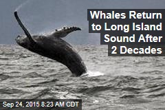 Whales Return to Long Island Sound After 2 Decades
