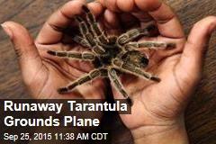 Runaway Tarantula Grounds Plane