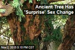 Ancient Tree Has a 'Sex Change'