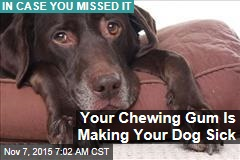 Your Chewing Gum Is Making Your Dog Sick