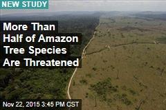 Say Goodbye to Over Half of Amazon Tree Species