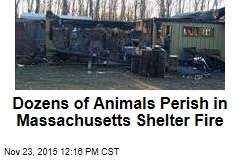 Dozens of Animals Perish in Massachusetts Shelter Fire