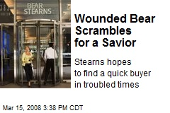 Wounded Bear Scrambles for a Savior
