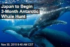 Japan to Begin 3-Month Antarctic Whale Hunt