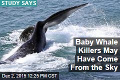 Baby Whale Killers May Have Come From the Sky