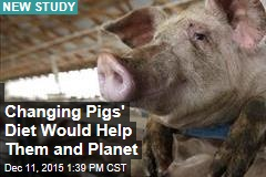 Changing Pigs' Diet Would Help Them and Planet