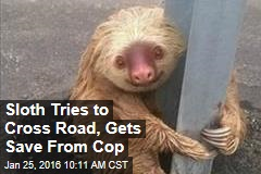 Sloth Tries to Cross Road, Gets Save From Cop
