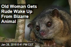 Old Woman Gets Rude Wake Up From Bizarre Animal