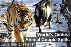 World's Oddest Animal Couple Splits