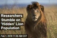 Researchers Stumble on 'Hidden' Lion Population