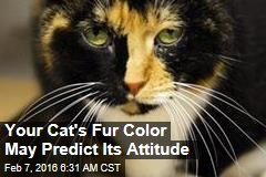 Your Cat's Fur Color May Predict Its Attitude