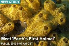 Meet 'Earth's First Animal'