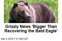 Grizzly News 'Bigger Than Recovering the Bald Eagle'