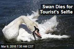 Swan Dies for Tourist's Selfie