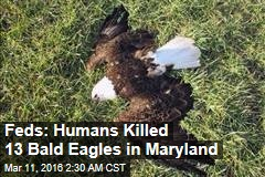 Feds: Humans Killed 13 Bald Eagles in Maryland
