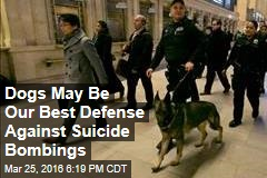 Dogs May Be Our Best Defense Against Suicide Bombings