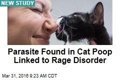 Parasite Found in Cat Poop Linked to Rage Disorder