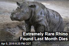 Extremely Rare Rhino Found Last Month Dies