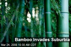 Bamboo Invades Suburbia