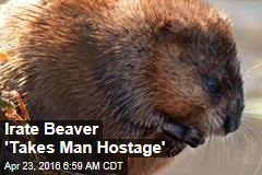 Irate Beaver 'Takes Man Hostage'