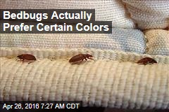 Bedbugs Would Rather Hide in Your Red Sheets, Please