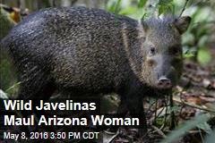 Wild Javelinas Maul Arizona Woman