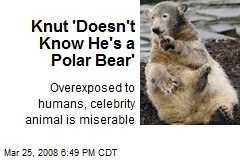 Knut 'Doesn't Know He's a Polar Bear'