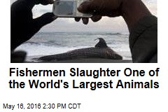 Fishermen Slaughter One of the World's Largest Animals