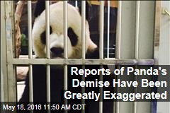 Reports of Panda's Demise Have Been Greatly Exaggerated