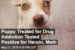 Puppy Treated for Drug Addiction Tested Positive for Heroin, Meth
