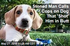 Stoned Man Calls Cops on Dog That 'Shot' Him in Butt