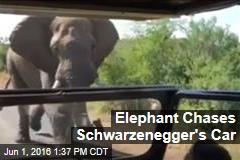 Elephant Chases Schwarzenegger's Car