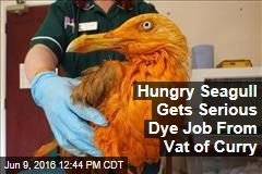 Hungry Seagull Gets Serious Dye Job From Vat of Curry