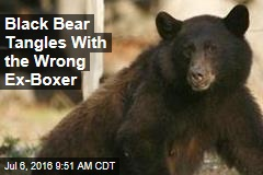 Black Bear Tangles With the Wrong Ex-Boxer