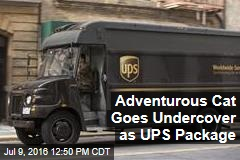 Adventurous Cat Goes Undercover as UPS Package