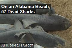 On an Alabama Beach, 57 Dead Sharks