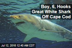 Boy, 6, Hooks Great White Shark Off Cape Cod